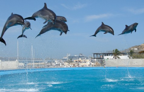 Dolphins-Synchronized-Jumping