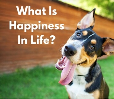 What Is Happiness In Life Post