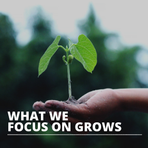 what we focus on grows SQUARE